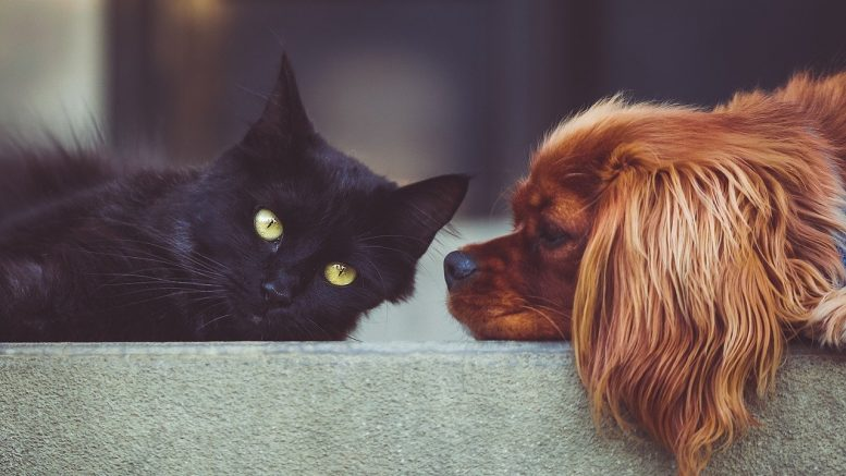 chien, chat, formation animaux, métier animaux